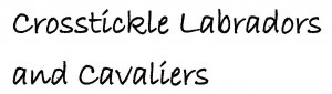 Crosstickle Labradors1