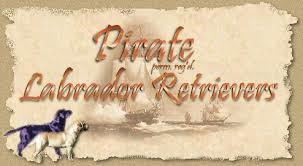 pirate labrador logo