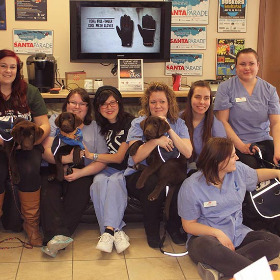 kingston-4-paws-service-dogs_sq11