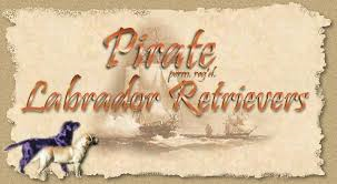 pirate labrador logo